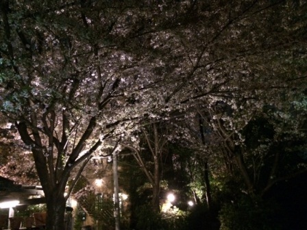 sakuraphoto 5.jpg